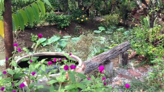 Part of the homestay's garden