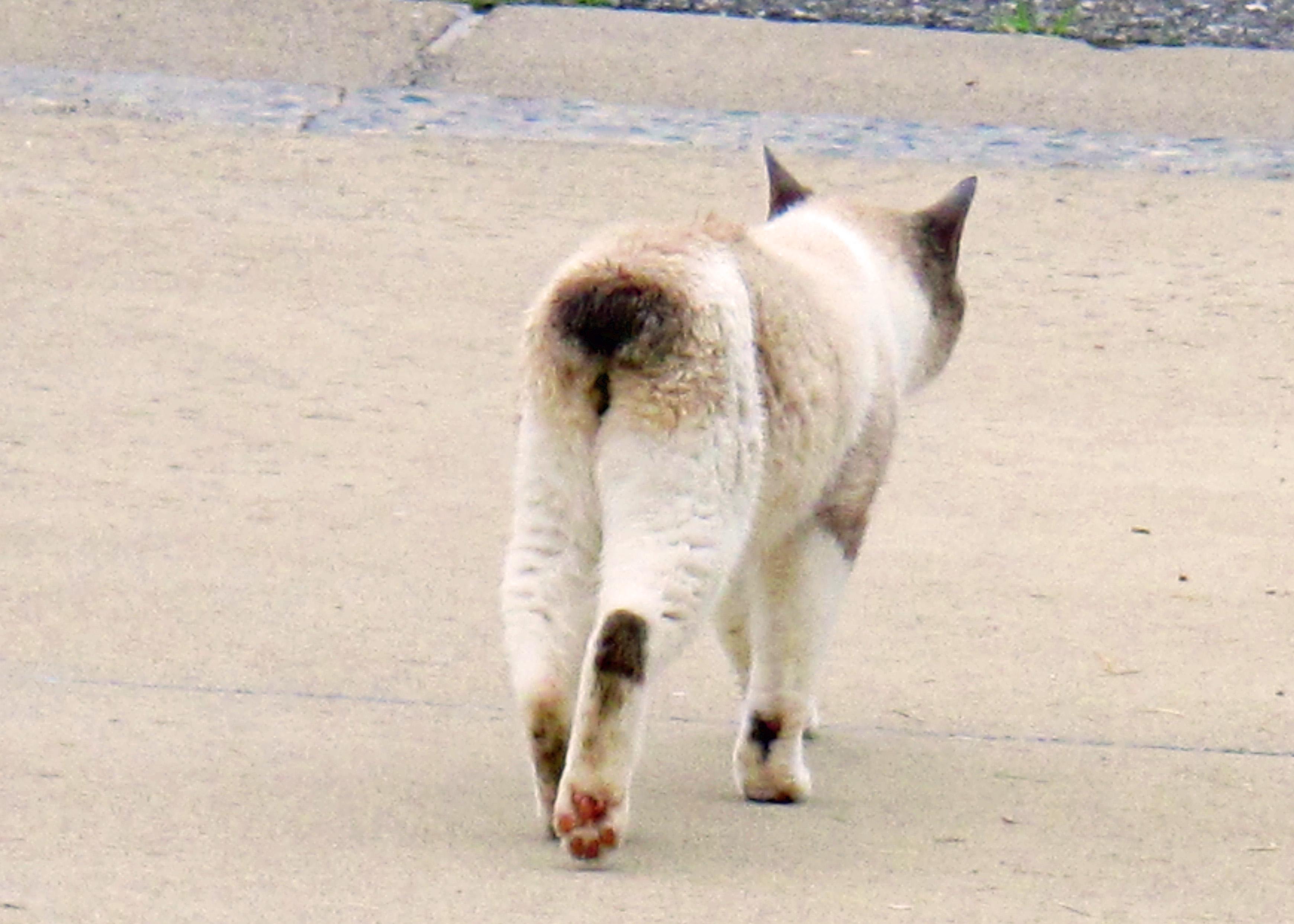 IMG_1443 cat