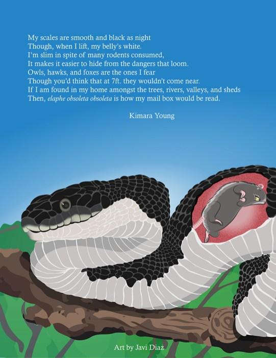 Rat Snake Illustration revised