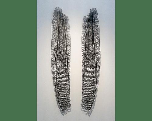 nervaduras-1-Alas-de-libélula
