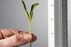 metricas-fase-startup-indicadores-ciclo-de-vida-fase