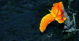 Flor y agua