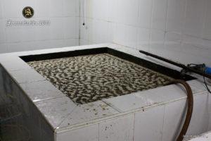 Fermentación · Proceso de Elaboración Ron Aldea · La Palma · Islas Canarias