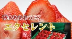 Fresas amaou
