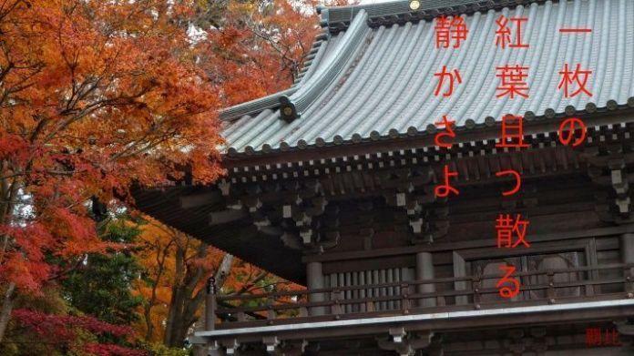Haiku de otoño. Hojas rojas