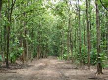 Hutan Jati Gunung Kidul