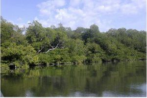 Lokasi Mangrove