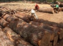 industri pengolahan kayu
