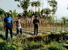 lahan yang dijadikan tampungan air