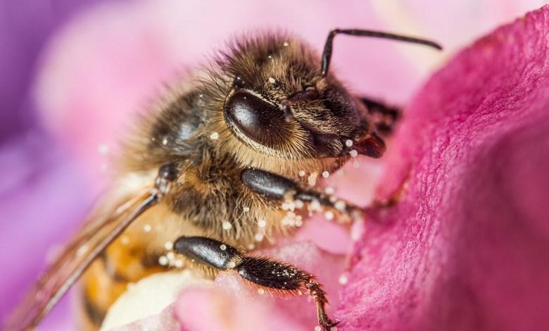 النحل يعاقب من يشرب الخمر