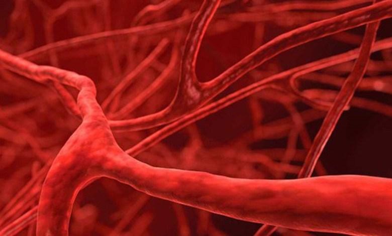 كيف تحافظ على أوعيتك الدموية من التلف؟