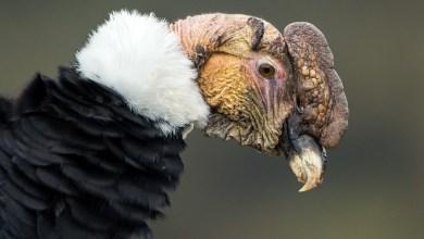 تعرف على الطائر الذي يقطع 170 كيلومترا من دون أن يحرّك جناحيه