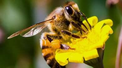 كيف تتعامل مع لدغات النحل والدبابير؟