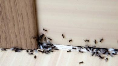 طرق منزلية فعّالة للتخلص من النمل