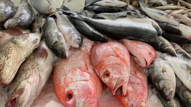 5 نصائح سهلة و بسيطة لمعرفة ما إذا كان السمك طازجا أم لا!