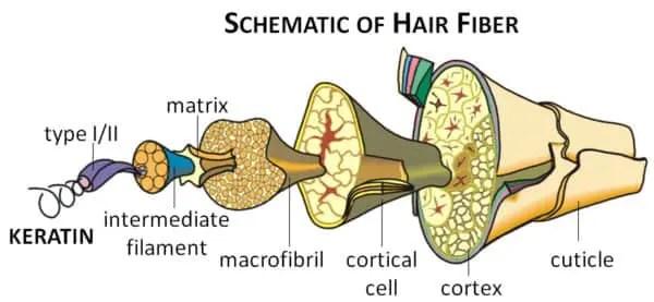 keratin hair protein