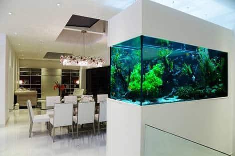 Di Mana Letak Yang Tepat Untuk Akuarium Di Dalam Rumah?