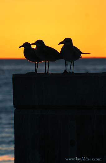 3birds-in-keywest