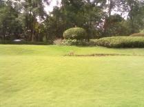 The lush green lawn