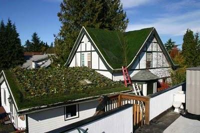 Atap Rumah Hijau