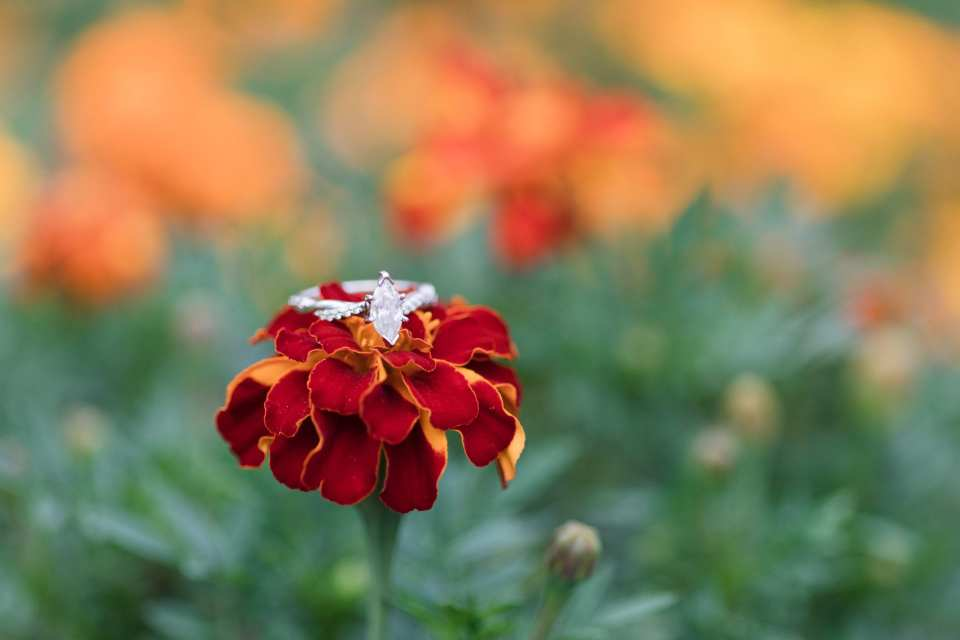 fall florals, Updike Farmstead, Princeton engagements, marquis cut diamond engagement ring