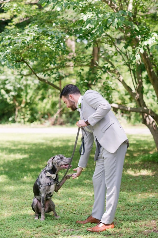 Groom in gray suit plays pay with his dog at the wedding