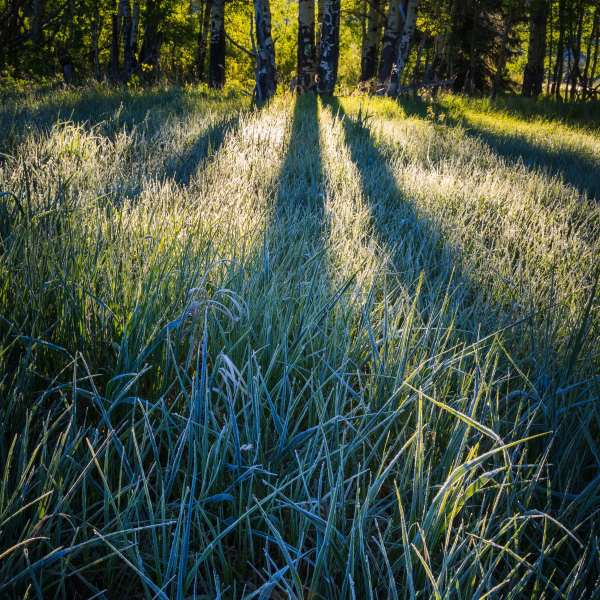 Teton Photo Adventures - Frost Summer Backlight Grass Wyoming