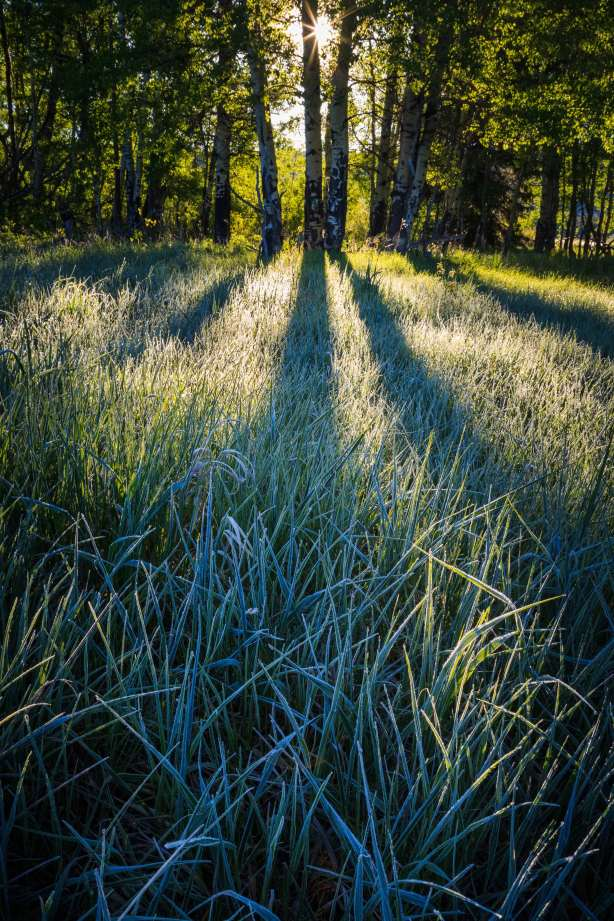 Teton Photo Adventures - Frost Summer Backlight Grass Wyoming