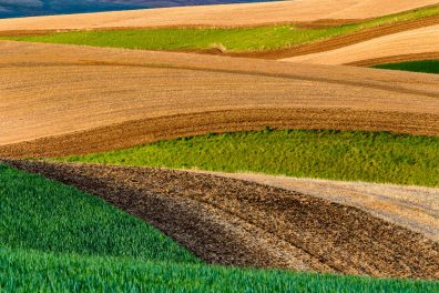 The rolling hillsides in the Palouse Region of Washington State near Colfax.