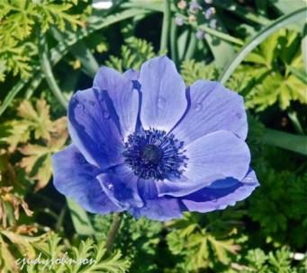 purpleflower_0704