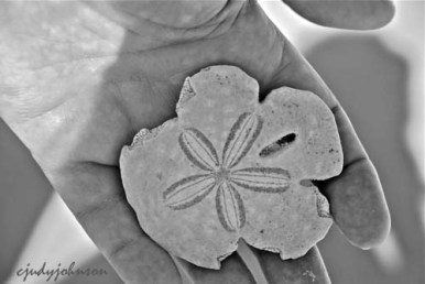 My husband found a sand dollar on the beach!