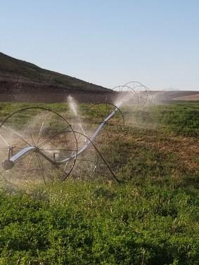 Sprinklers in the Wheatfields