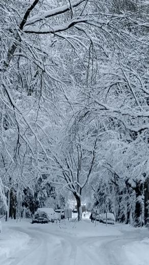 2017 Winter in Portland