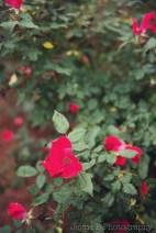 AthensWeddingPhotographer_JayneBPhotography_AtlantaWeddingPhotographer-2