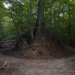 Sunken Trace Along The Natchez Trace