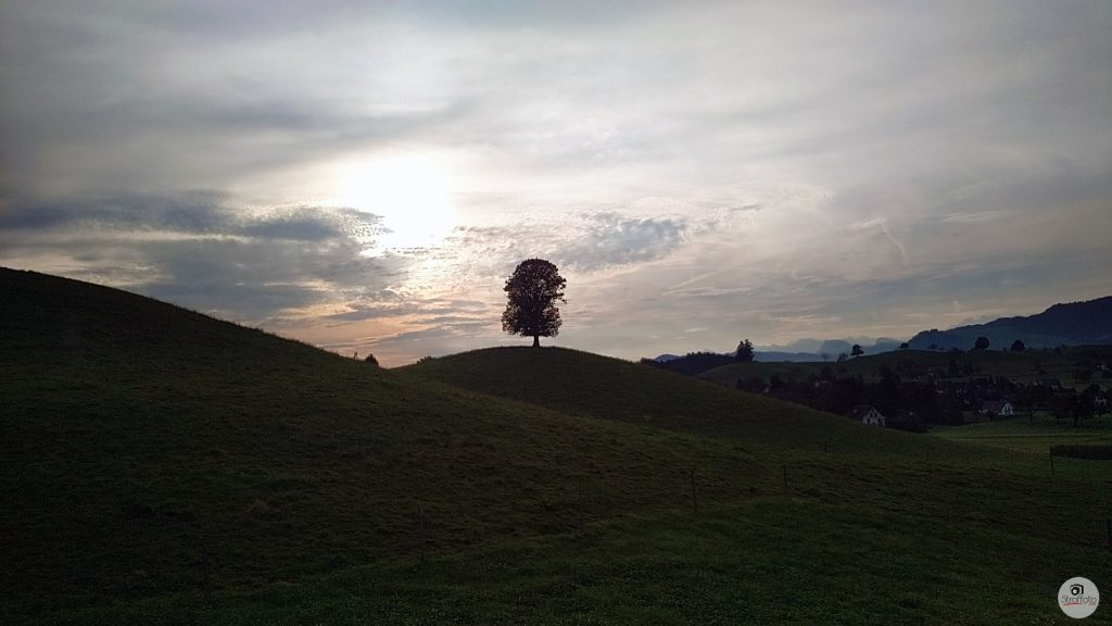 Lonely Tree in Switzerland