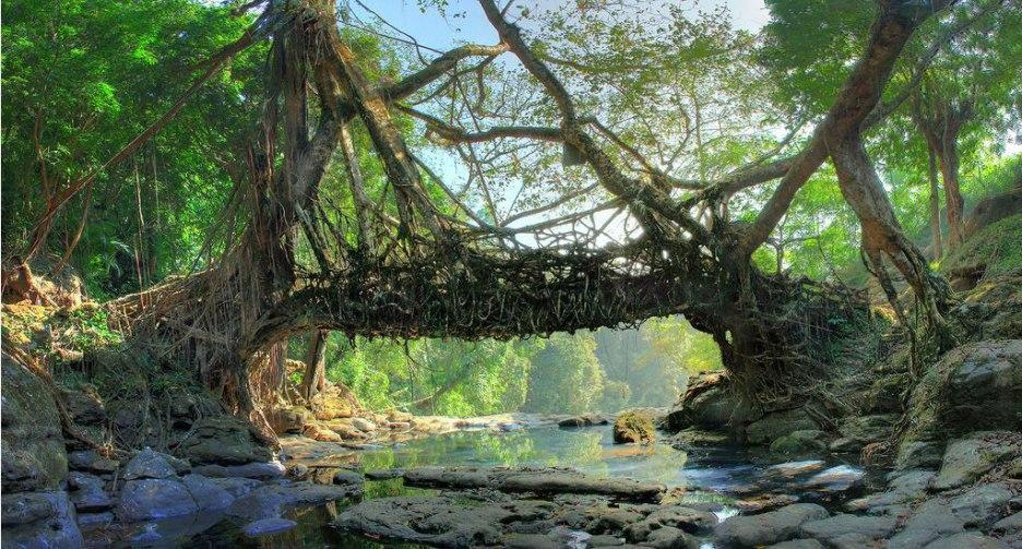 A-Living-Root-Bridge,-Mawlynnong