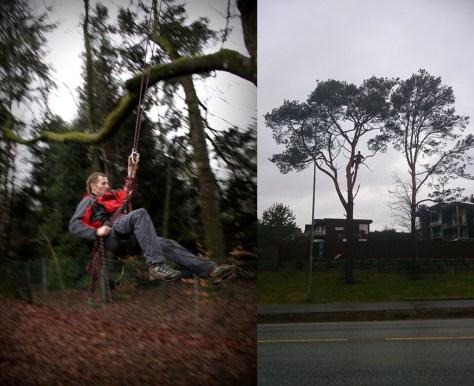 kesze znajdywane na drzewach