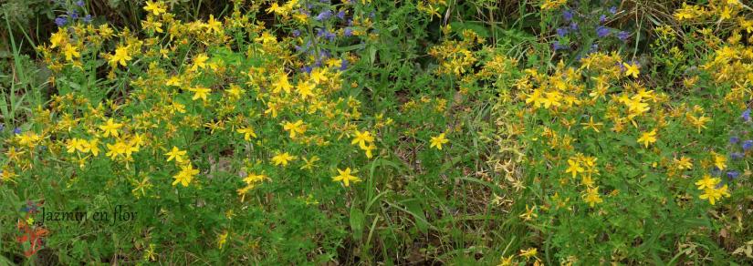Hipérico Jazmín en flor Cosmética natural