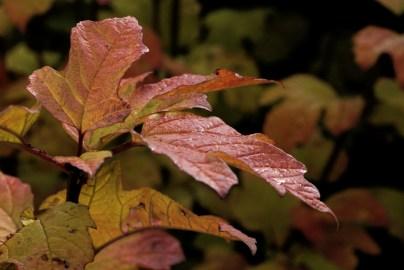 autumn28
