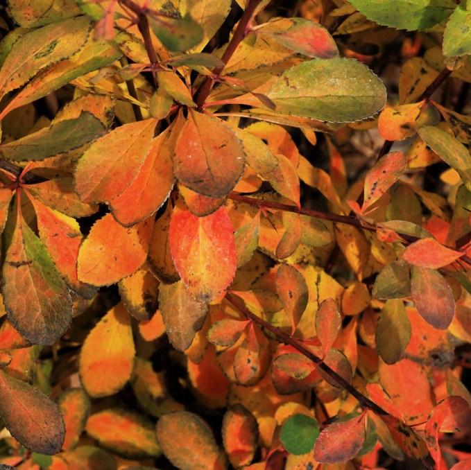 autumn30