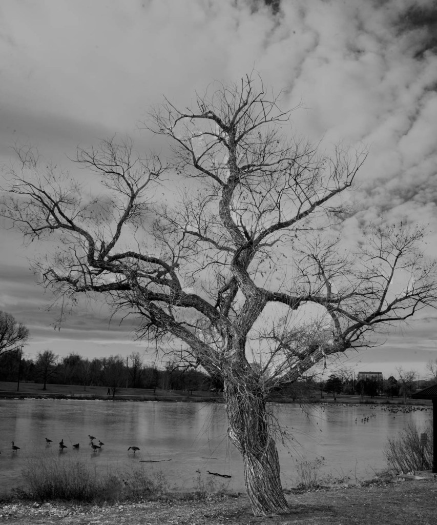 Tree by a Pond
