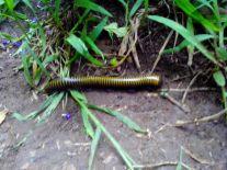 Save Me - Millipede/Centipede