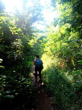 Lush Vegetation Pico De Loro