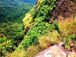 Lush Green Vegetation At Pico De Loro