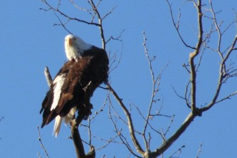 But these are the ones which you shall not eat: the eagle and the vulture and the buzzard. - Deuteronomy 14:12