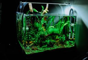 green plant in clear glass fish tank