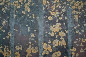 Mold-buying you first Culver City property