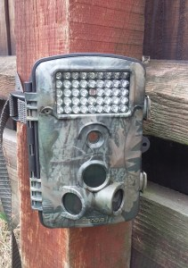 Crenova Trail Camera Review
