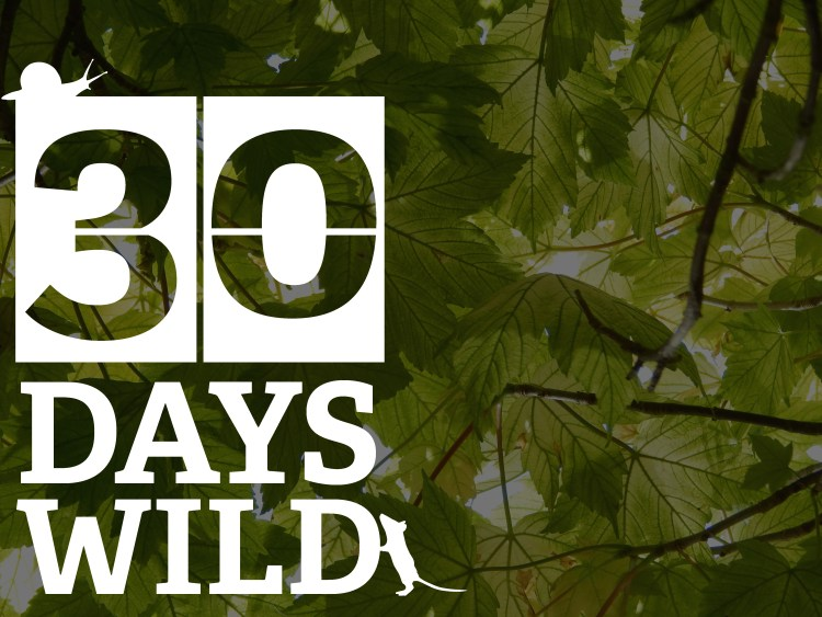 sunlight through leaves with the 30 days wild logo
